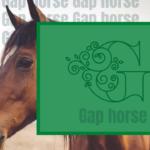 GapHorse【ギャップ馬】